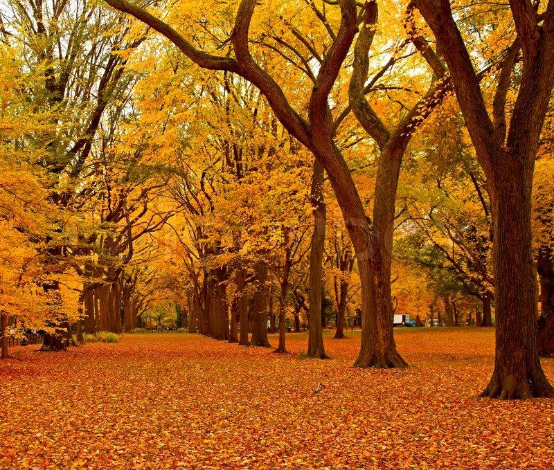 THÁNG 9 LÁ THU VÀNG 4443161-new-york-city-central-park-alley-in-the-fall