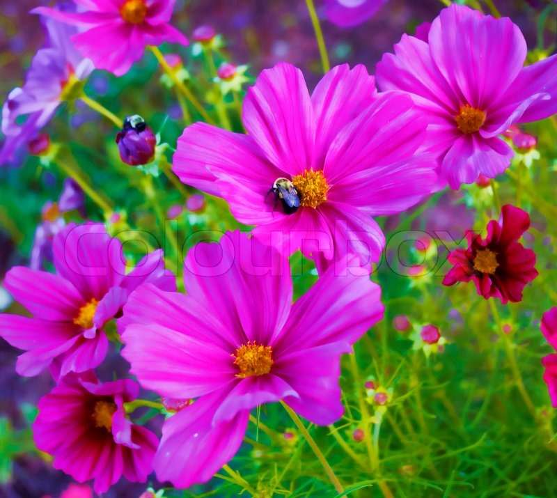 beautiful purple flowers with a bee collecting nectar  stock, Beautiful flower