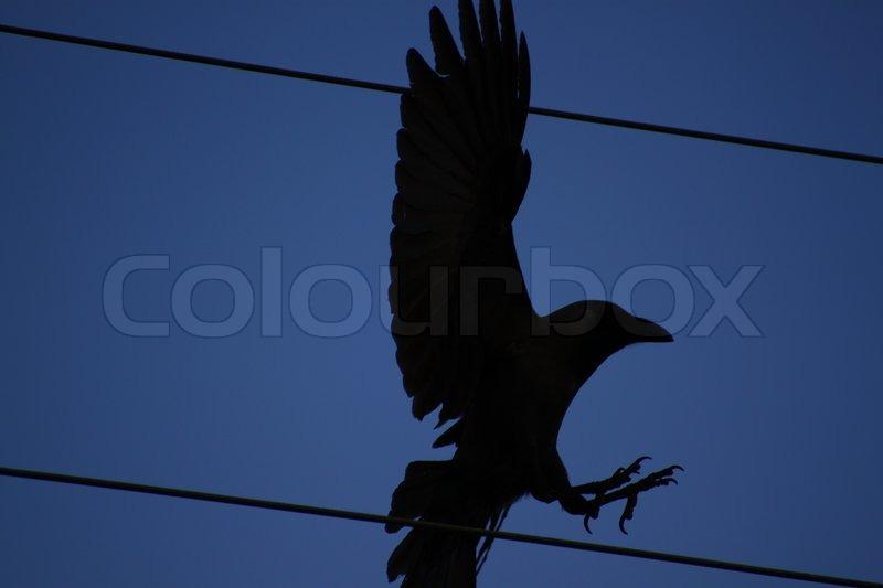 Halloween Black Birds