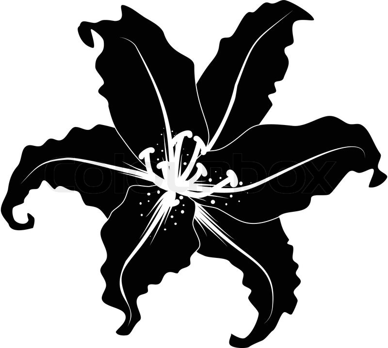 Silhouette Of Lily Vector Colourbox