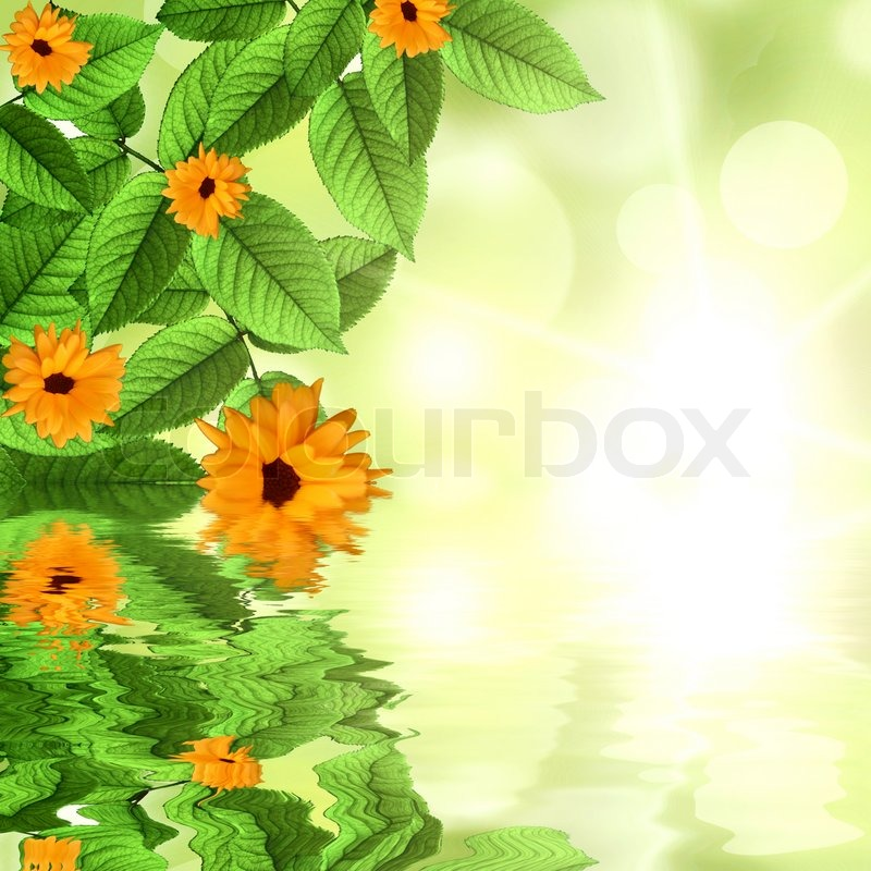 Natural Green Flower Natural Green Background With