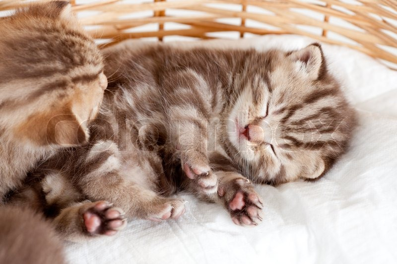 Funny Sleeping Baby Cat Kitten In Stock Image Colourbox