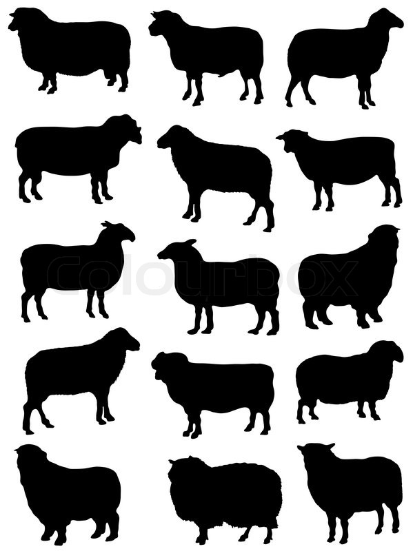 Collection of silhouettes of sheep | Vector | Colourbox: colourbox.com/vector/collection-of-silhouettes-of-sheep-vector-4473490