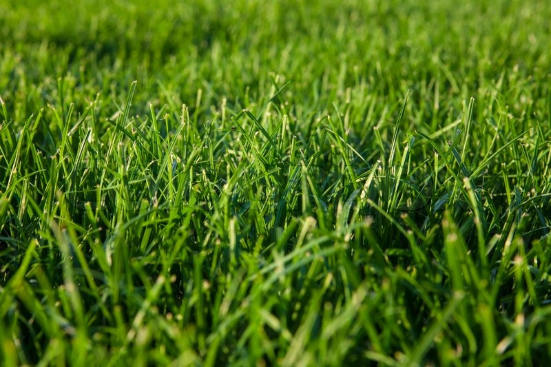 how to make grass green in summer