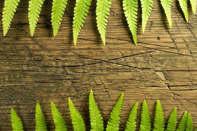 Fresh fern border on vintage wooden background with copy stock photo