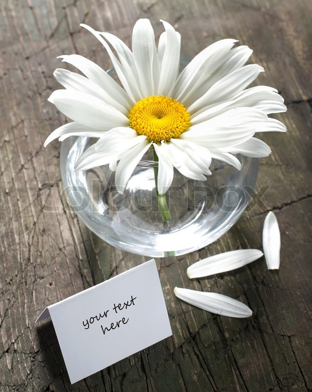 Daisy In The Vase And Paper Card On A Vintage Wooden Surface Stock