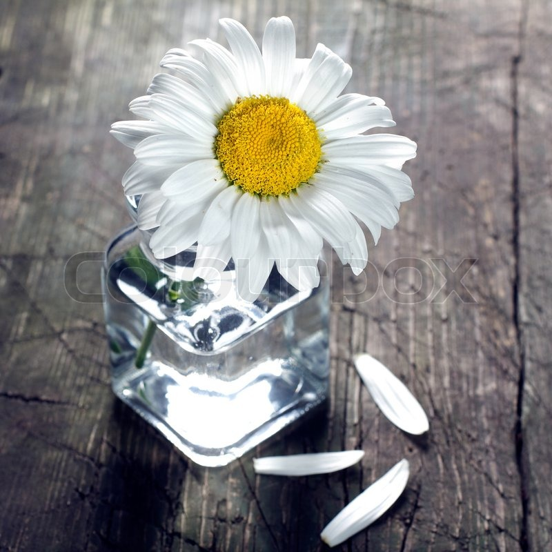 Daisy In Vase On The Vintage Vooden Surface Stock Photo Colourbox