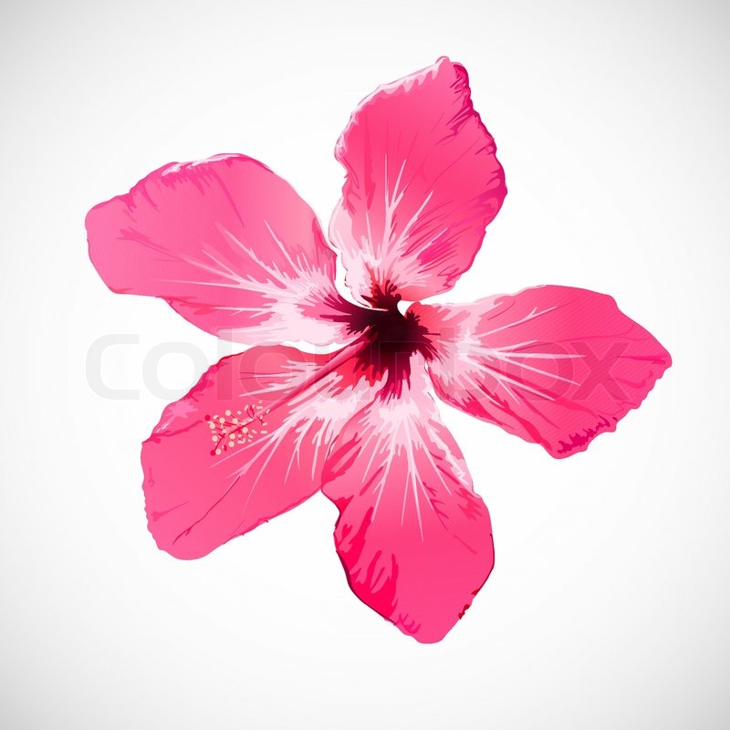 hibiscus tropical flower vector art stock vector colourbox