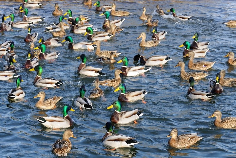 Duck Lake Property