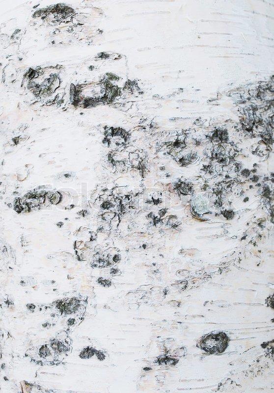 birch tree gray wallpaper