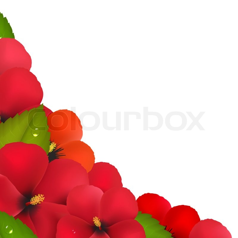 Red Hibiscus Flowers With Leaf Border Stock Image Colourbox