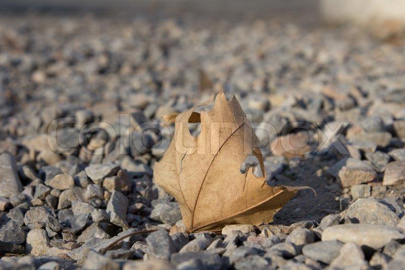 Autumn leaf on a stone ground, stock photo