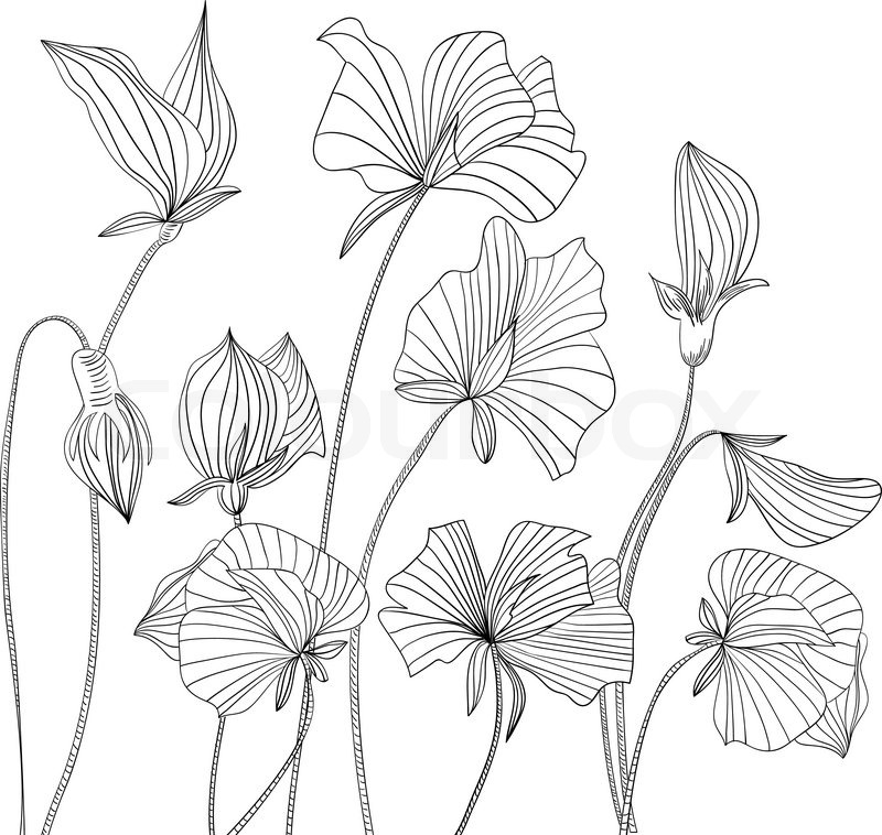 Sweetpea Flowers on Gallery   How To Draw A Sweet Pea Flower
