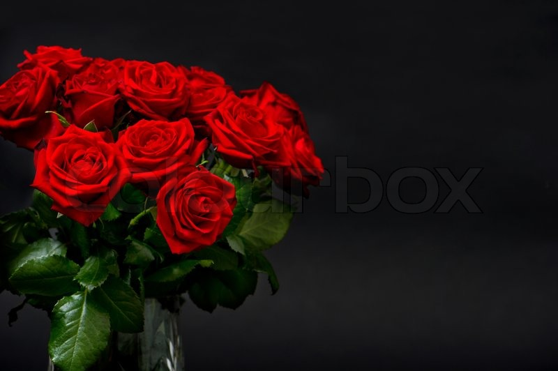 Red roses on bl...