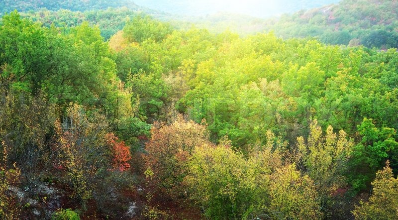 Forest texture, stock photo