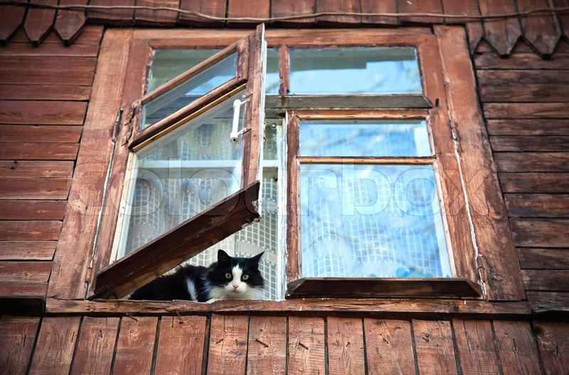 cat inside of the window in old wooden house stock photo col