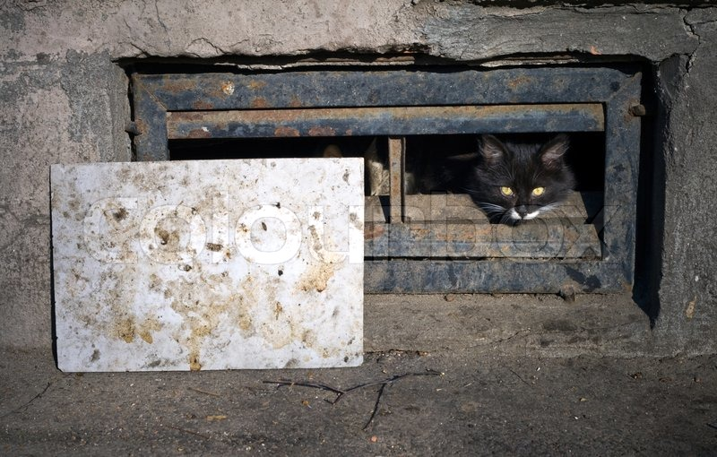 black street cat in the the basement window stock photo