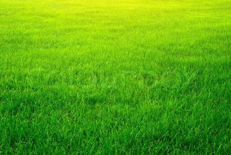 Green Grass Background Stock Photo Colourbox