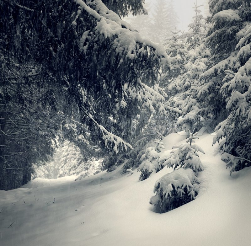 fairytales snowfall in winter forest vintage stylized