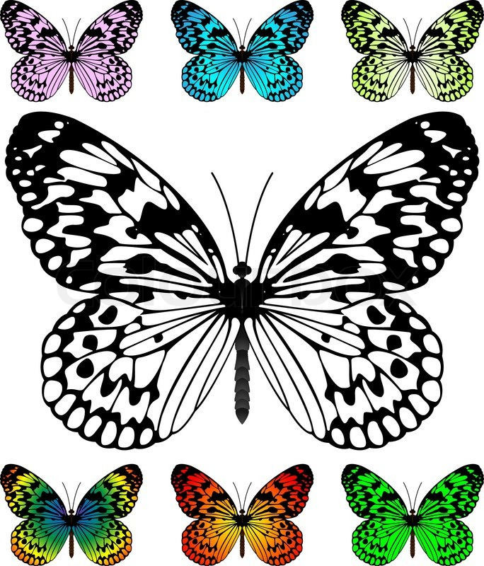 Butterfly Vector Template With Samples Easy Editable Wings Color