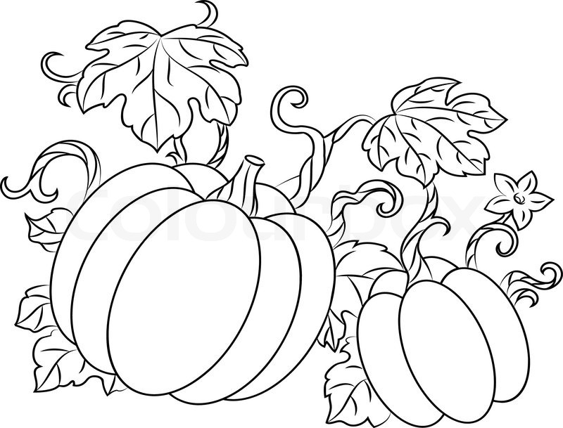 Autumn Squash Coloring Page
