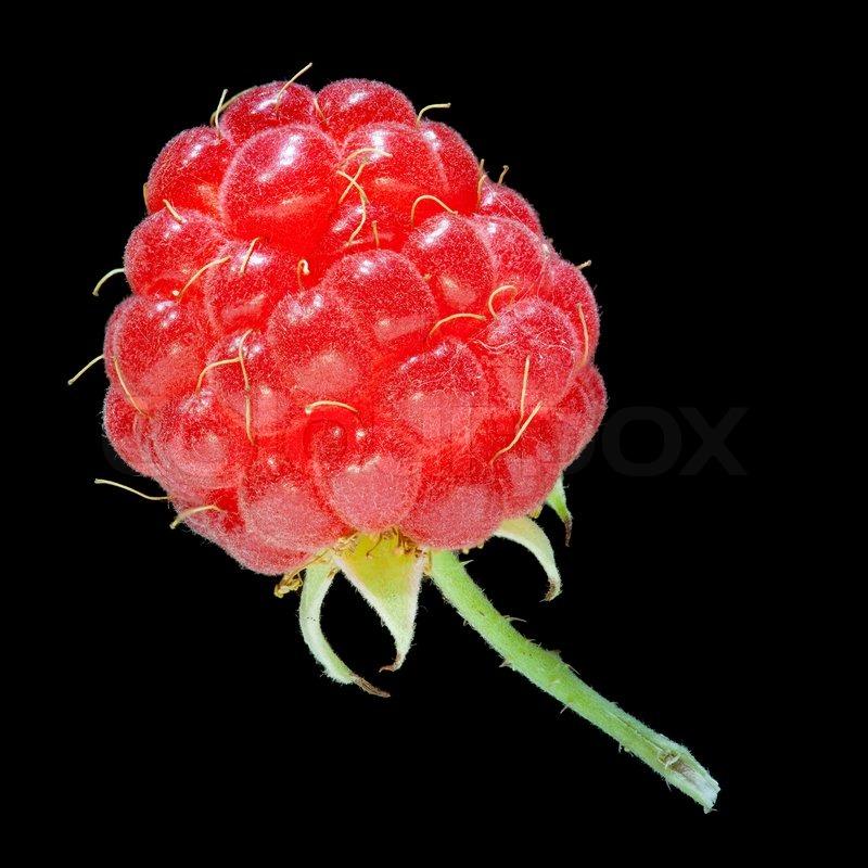 Raspberry Fruit Closeup Isolated On White Stock Photo 89736166 ...