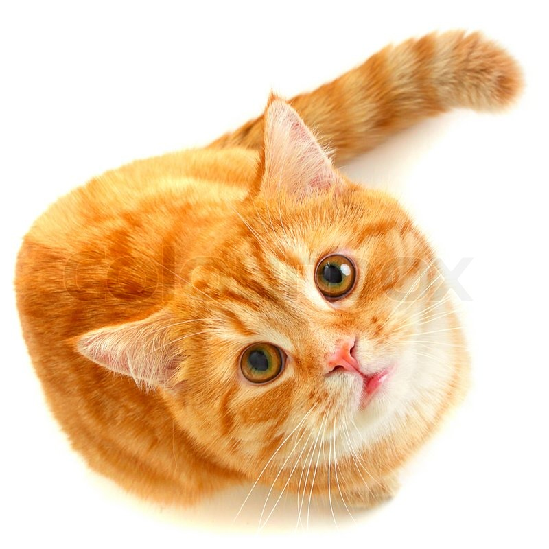 4588403-815222-red-cat-looking-up-isolated - Ipagawas Ang Inyung Gibati - Anonymous Diary Blog
