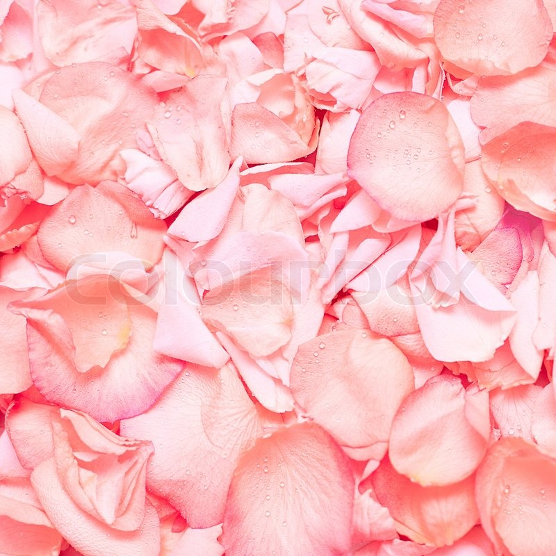 Pink rose petals floral background stock photo colourbox