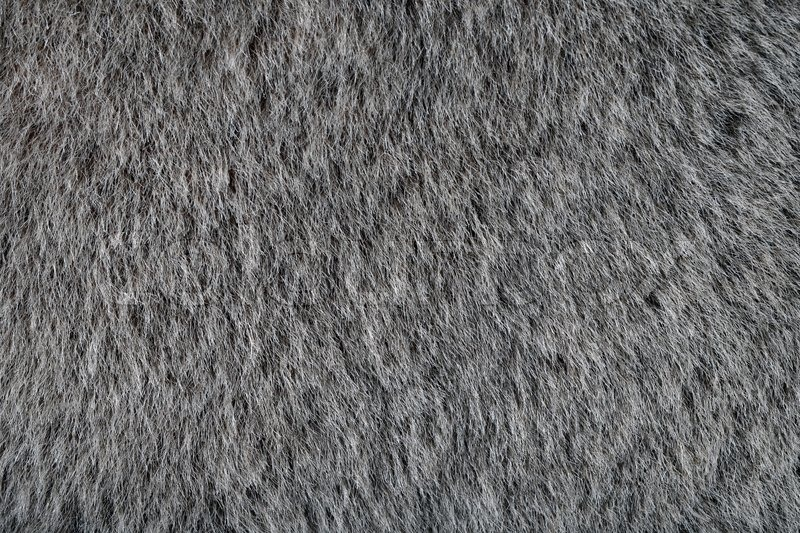 animal gray fur texture as wallpaper or background stock