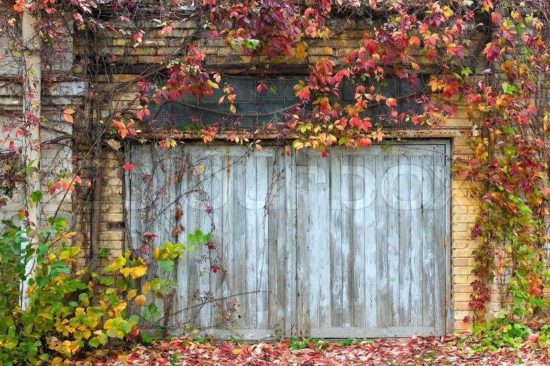 Old wooden door with a brick wall and creepers stock photo - Vieille porte en bois ...