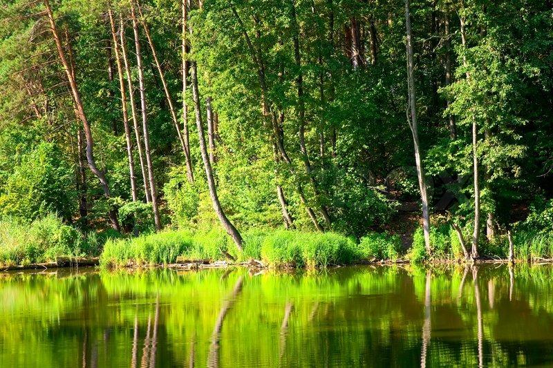 ⭐️ Cảnh Đẹp Mùa Xuân Trên Thế Giới ⭐️ 4594587-beautiful-landscape-with-forest-lake