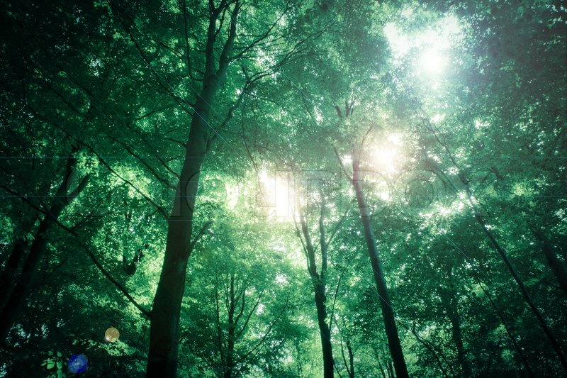 Fantasy forest with sunlight in the trees | Stock Photo