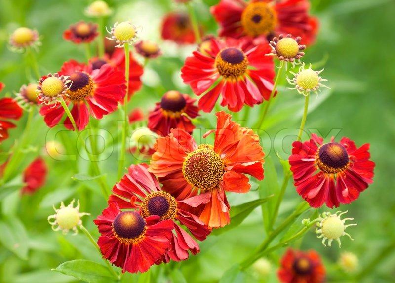 Flowers In The Garden Flower