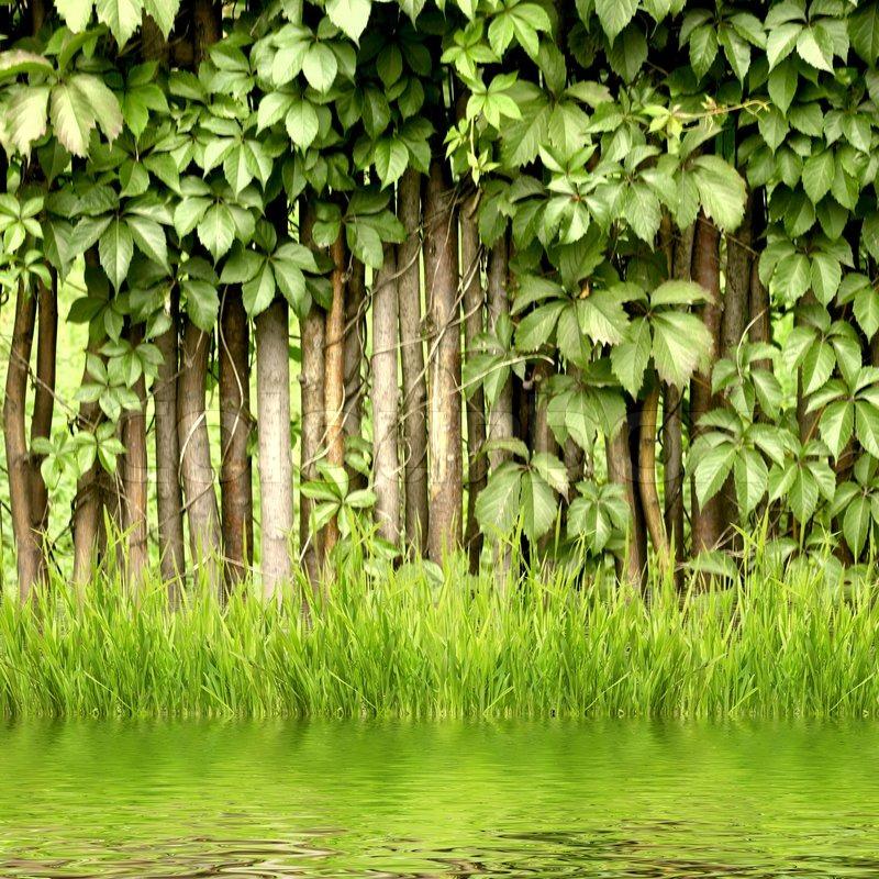 Fragment einer l ndlichen zaun hecke und gr n grassfrom for Pflanzen evergreen