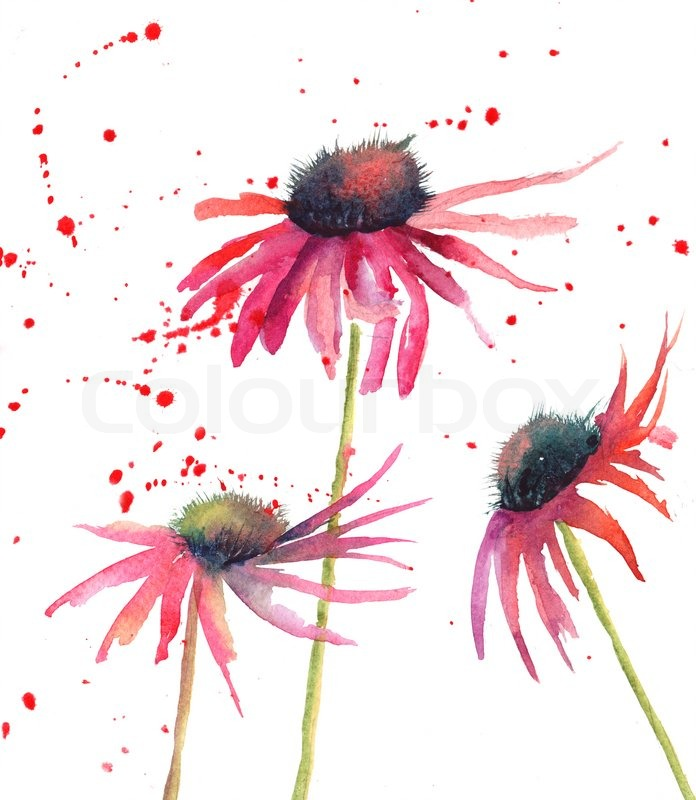 Summer flowers, watercolor flowers | Stock Photo | Colourbox