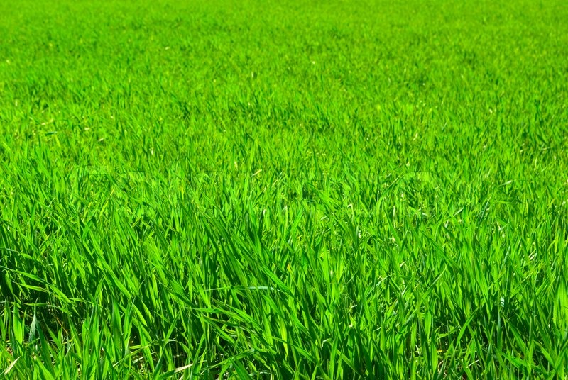 Lawn Background Stock Photo Colourbox