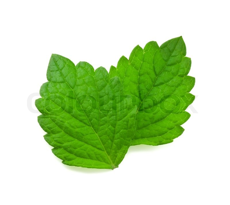 Displaying (20) Gallery Images For Mint Leaf Illustration...