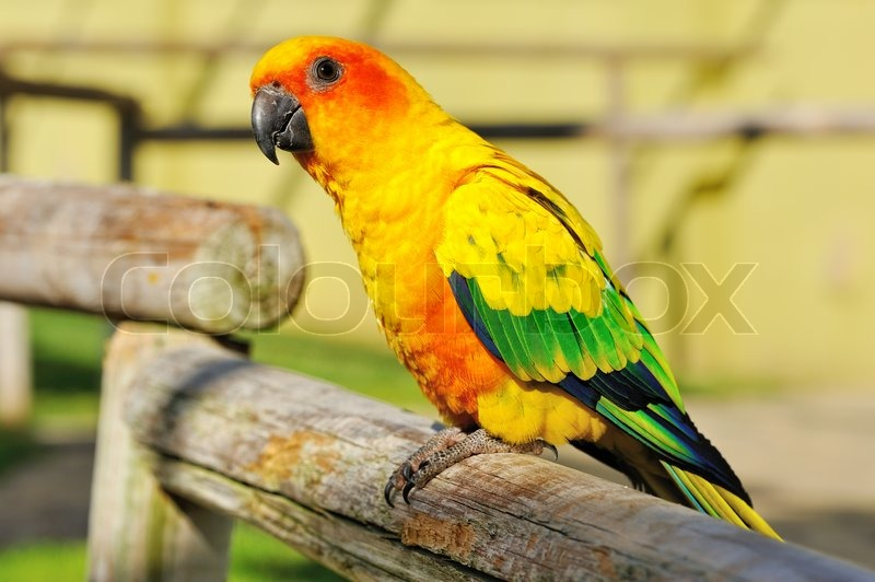 tropical yellow parrot with green wings stock photo colourbox
