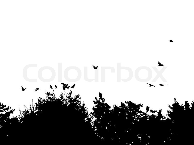 Silhouettes of branches of trees and birds  Stock Vector  Colourbox