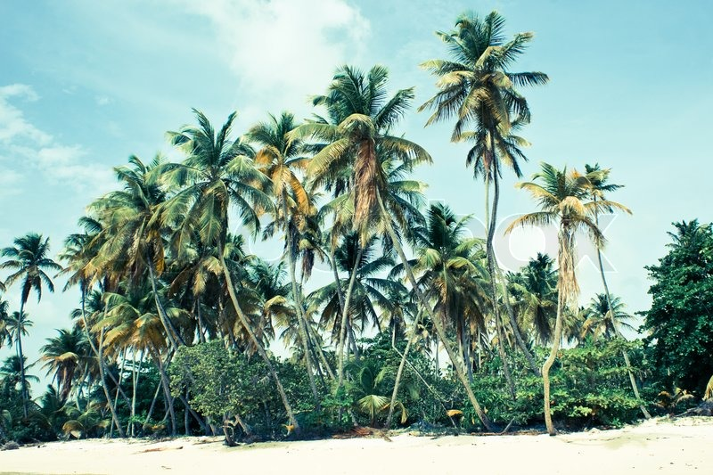 Landscape Scenery Of A Beautiful Tropical Island With Green Palm Trees On The Beach And Blue Sky