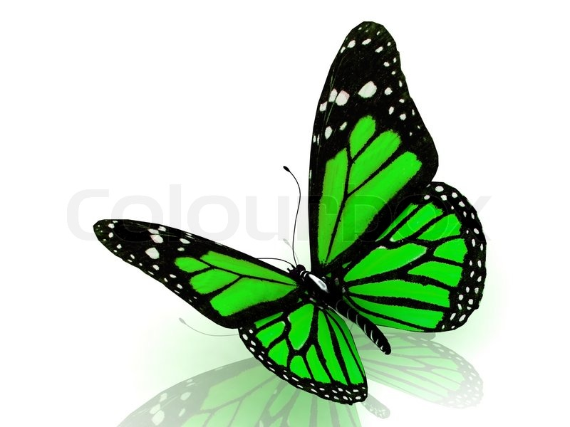 beautiful green butterfly stock photo colourbox. Black Bedroom Furniture Sets. Home Design Ideas