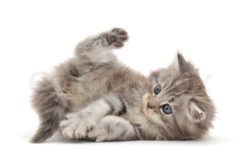 Stock image of 'Kitten on a white background'