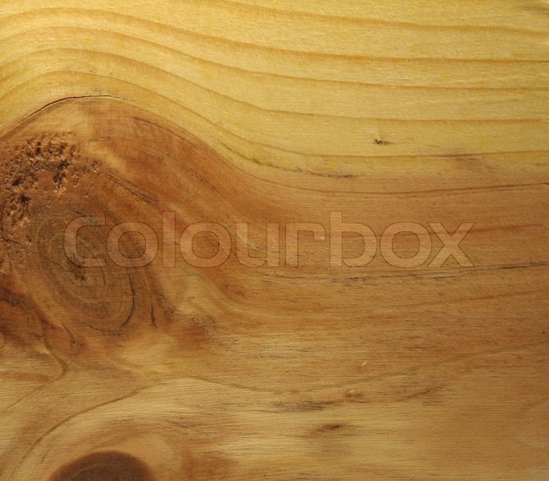 Tree structure, stock photo