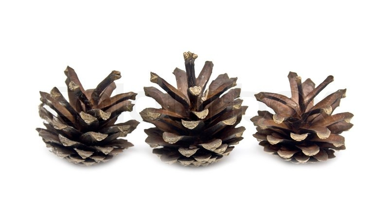 Pine Cone On A White Background Stock Photo Colourbox