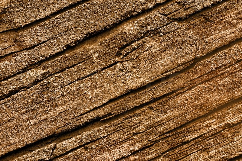 Natural wood texture  Pasteurized High Resolution Old Natural Wood Textures | Stock ...