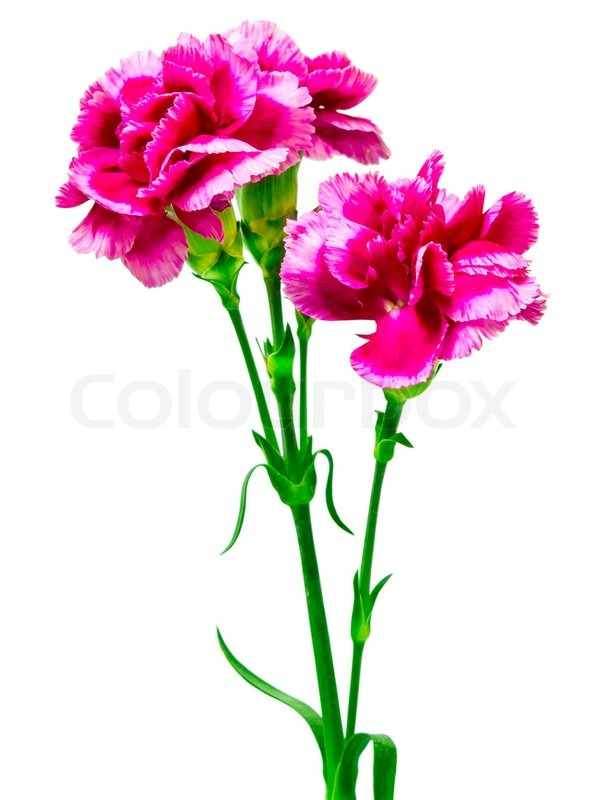 Single Flower Painting Images