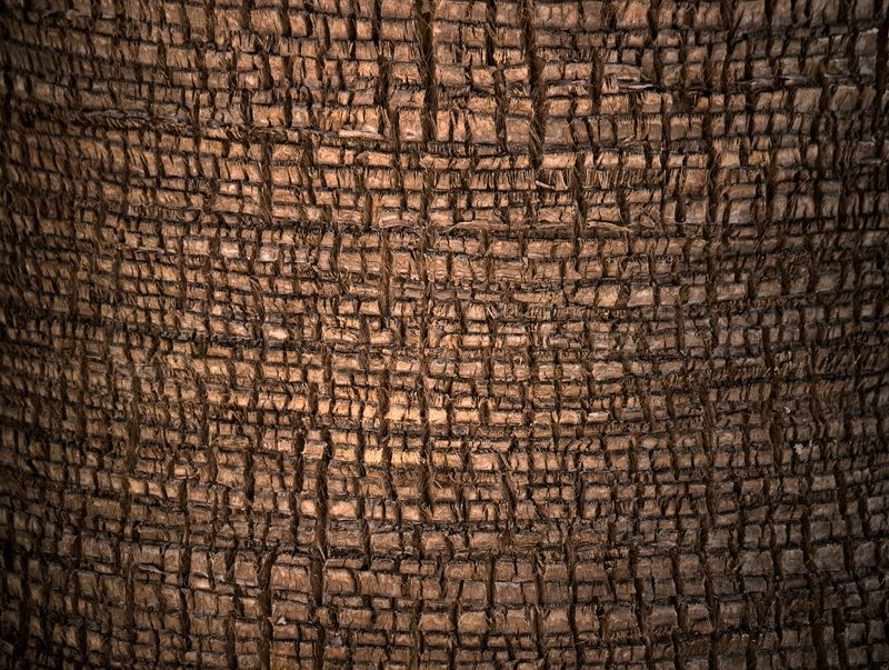 Palm tree cortex detailed closeup texture | Stock Photo ...  Palm tree corte...