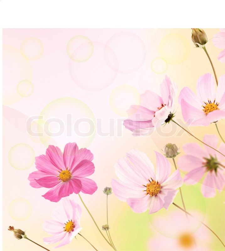 Beautiful Flowers Border Floral Design Stock Photo