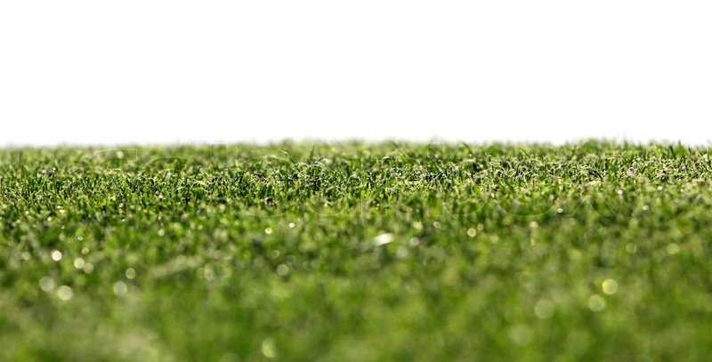 Grass on a golf course with small focus | Stock Photo | Colourbox