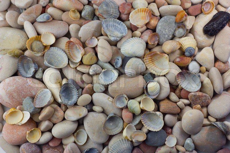 Sea Pebbles And Shells Background Stock Photo Colourbox